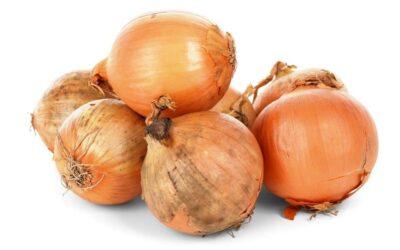 Die Zwiebel – Eine gesunde Knolle mit Heilwirkung